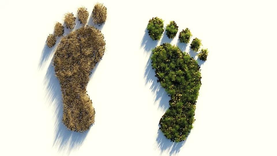 Blive mere miljøvenlig – Sådan gør du